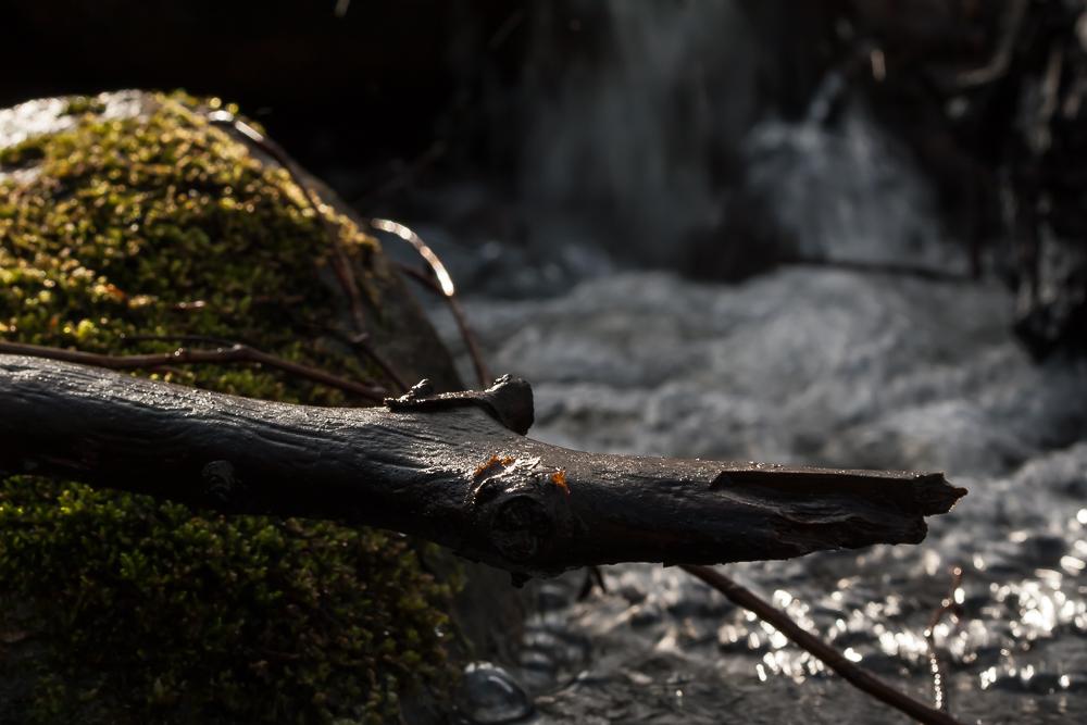 Iltapäivän aurinkoa purolla.
