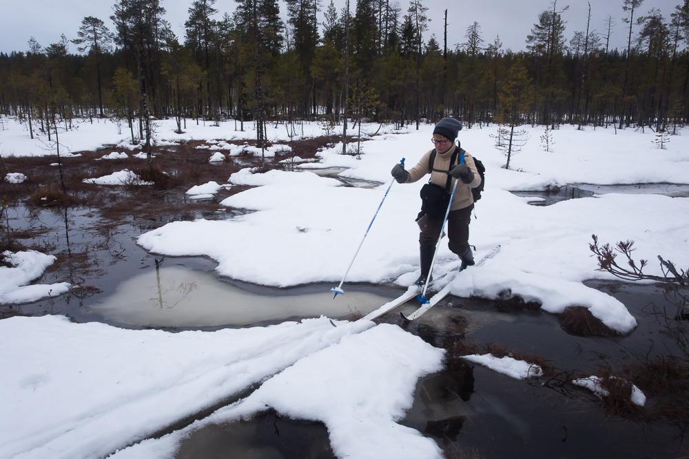 Kuntoilla voi vaikka Pohjois-Savolaisella suolla hiihtäen. ;)